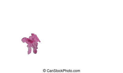 Abstract pink flow of fluid on white background - close-up...