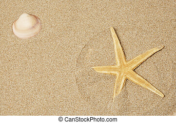 seashell and seastar - a seashell and a seastar on the sand