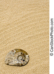 seashell - a fossil of a seashell on the sand of a beach