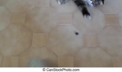 Playful Cat - Video clip of cat playing inside the house.
