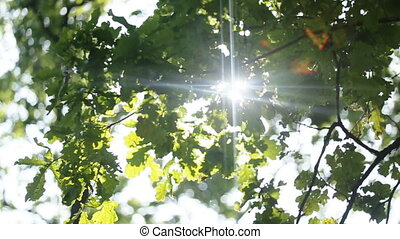 Fresh green leaves in a forest framing the sun in the middle...