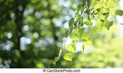 Forest trees leaf. nature green wood sunlight backgrounds. -...