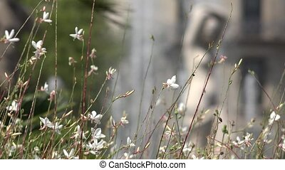 Wild White Flowers And Stems