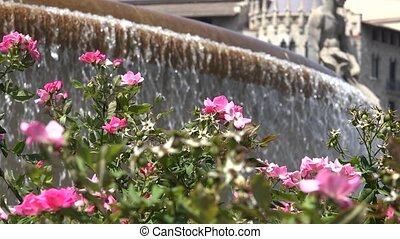 Pink Flowers And Water Fountain