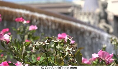 Flowering Plants At Water Fountain