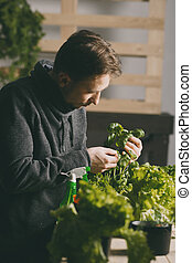Handsome grower carefully growing and checking plants indoor...