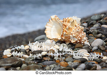 seashell and necklace on stone seacoast