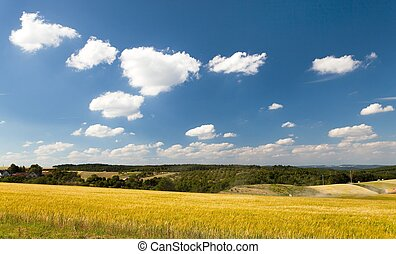 field of barley and beautiful sky with white clouds