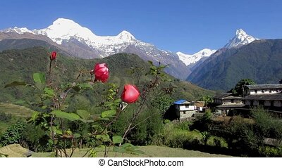 Ghandruk village in Nepal - Ghandruk village and the...
