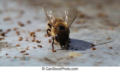 bee collecting wax - Macro view of bee collecting wax from a...