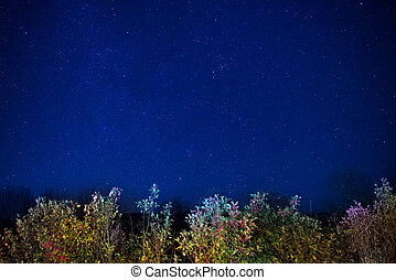 Autumn forest under blue dark night sky with many stars...