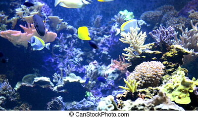 Colorful fishes near coral reef and corals - Underwater...
