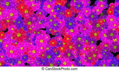 flowers background abstract
