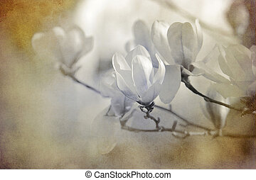 white magnolias textured on old paper