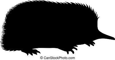 Spiny anteater, shade picture