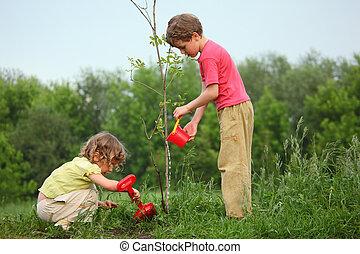 niños, planta, árbol