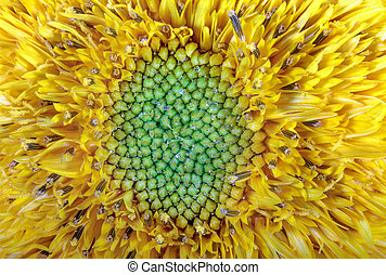 image flower garden ornamental sunflower yellow - a image...