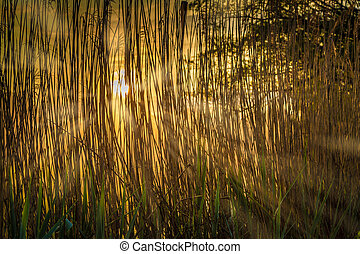 Early in the morning through the reeds - The catchment area...