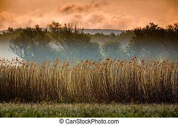 Natural reeds wall - The catchment area and meadow near the...
