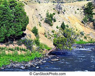 Tenacity - Lone cedar tree illustrated tenacity as it clings...