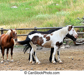 Docile and Tame - Full length image of a group of horses...
