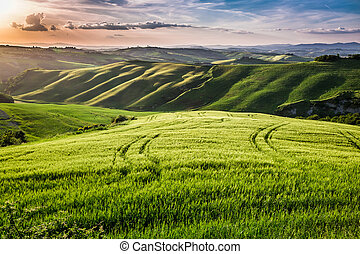Beautiful view of the country footpath at sunset in Tuscany