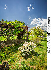 Old wooden pergola covered with flowers