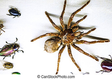 Another Insect Collection - A large colection of exotic...
