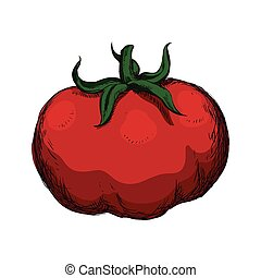 tomato sketch vegetable healthy food icon. Vector graphic