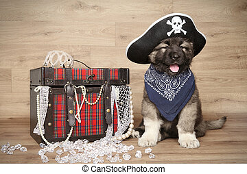 Caucasian shepherd in pirate hat - Caucasian shepherd in...