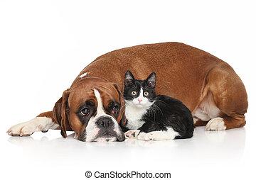 vit, bakgrund, hund, tillsammans, katt