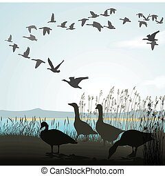 Migrating geese from lake shore - Vector illustration of...