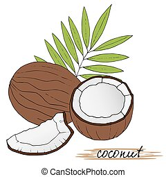 Hand drawn coconuts with leaves on white background.
