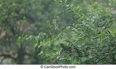 Monsoon Tropical Jungle Heavy Rain