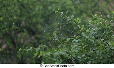 Rain falling over green leaves blurred background