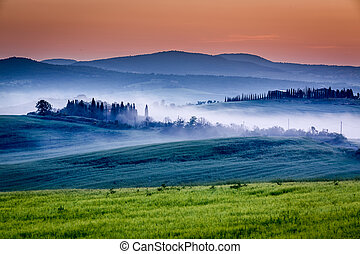 Farm of olive groves and vineyards in foggy sunrise
