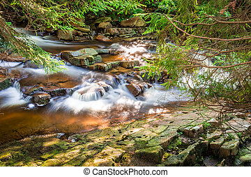 Mountain stream among the forest