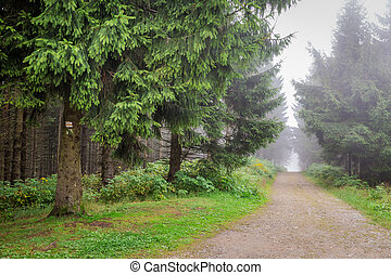 Misty mountain trail in the forest