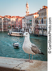 Seagull over the canal in Venice