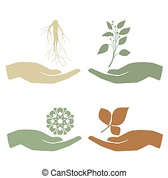 Hand holding plant. Growth concept