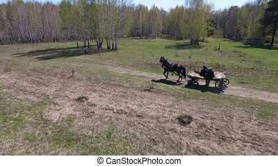 Men go to the horse carts in woods - forest of birches and...