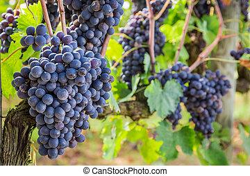 dojrzały, winogrona, Na, przedimek określony przed...