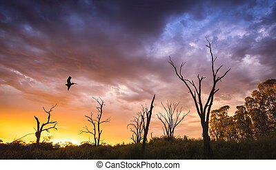Flying High - Pelican flies over dead trees on the River...