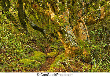 Goblin Forest - Twisted fairy tale trees in Kamahi Forest on...