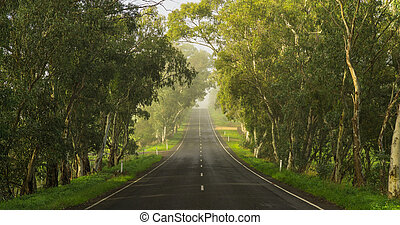 Hills Drive - Road in the Adelaide Hills, South Australia