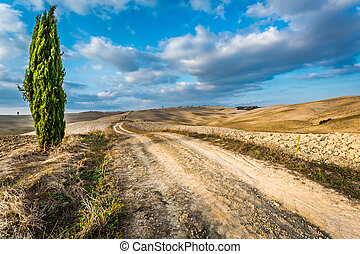 Beautiful view of yellow fields at sunset in Tuscany
