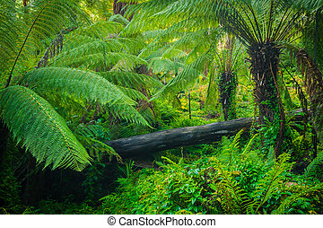 Lush Forest - Beautiful lush palms growing wild