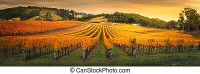 Golden Vineyard - Gorgeous Vineyard in the Adelaide Hills