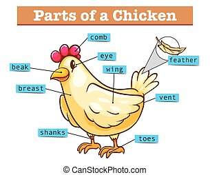 Diagram showing parts of chicken illustration