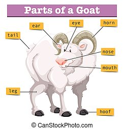 Diagram showing parts of goat illustration